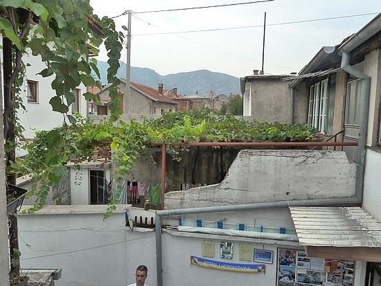 Grape vine trellis and shade