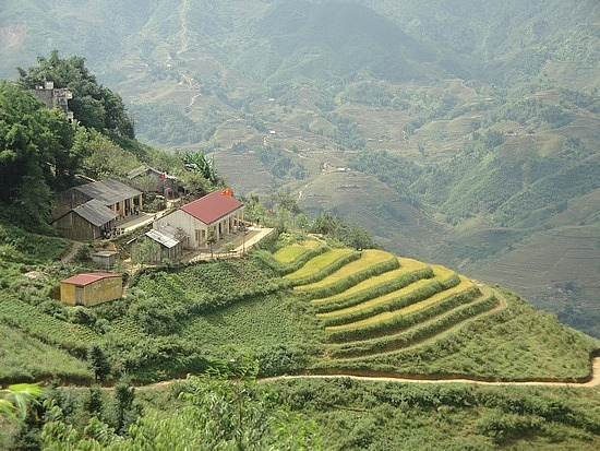 Endless rice terraces