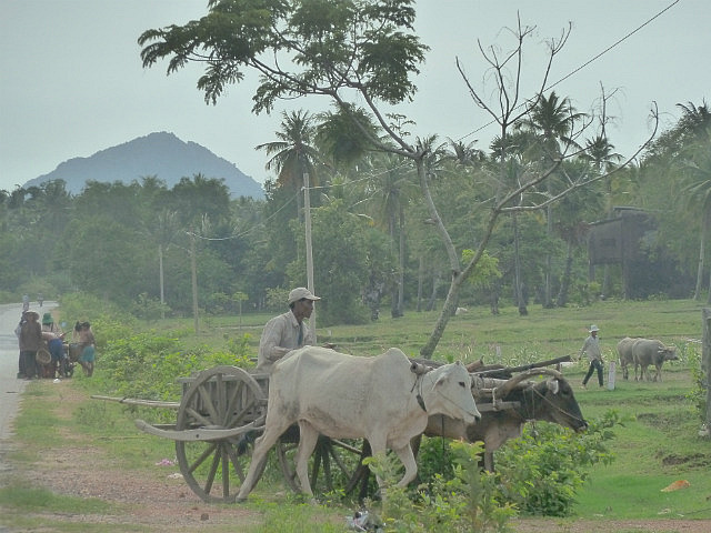Love oxen and carts