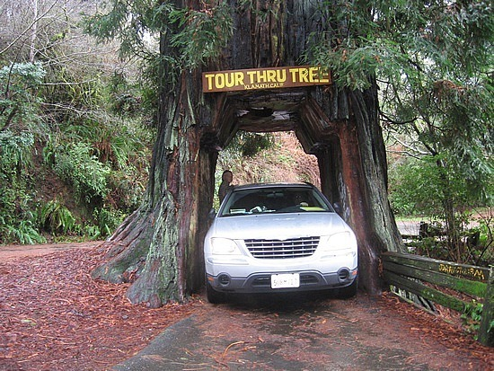 Klamath - drive through tree
