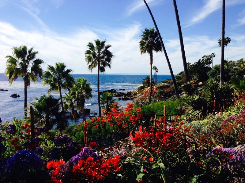 Palm trees and bright flowers