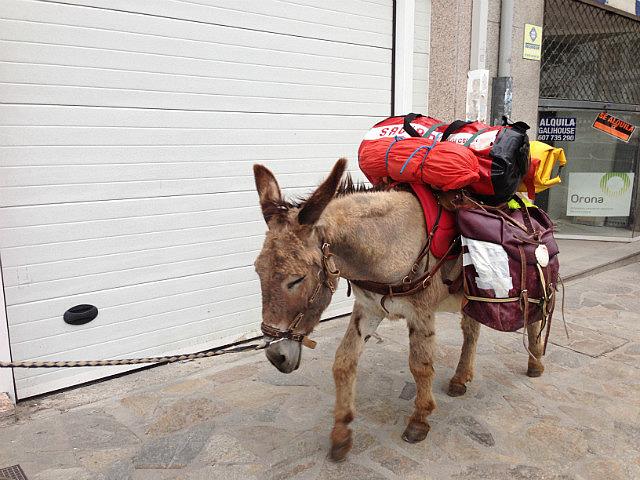 Donkey laden up