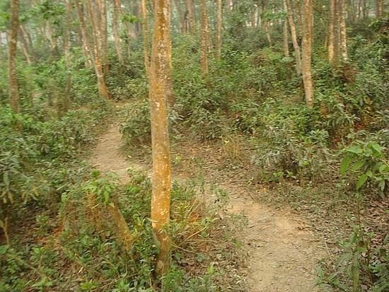 The track before we started bush bashing