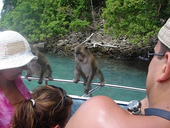 Monkeys on our boat