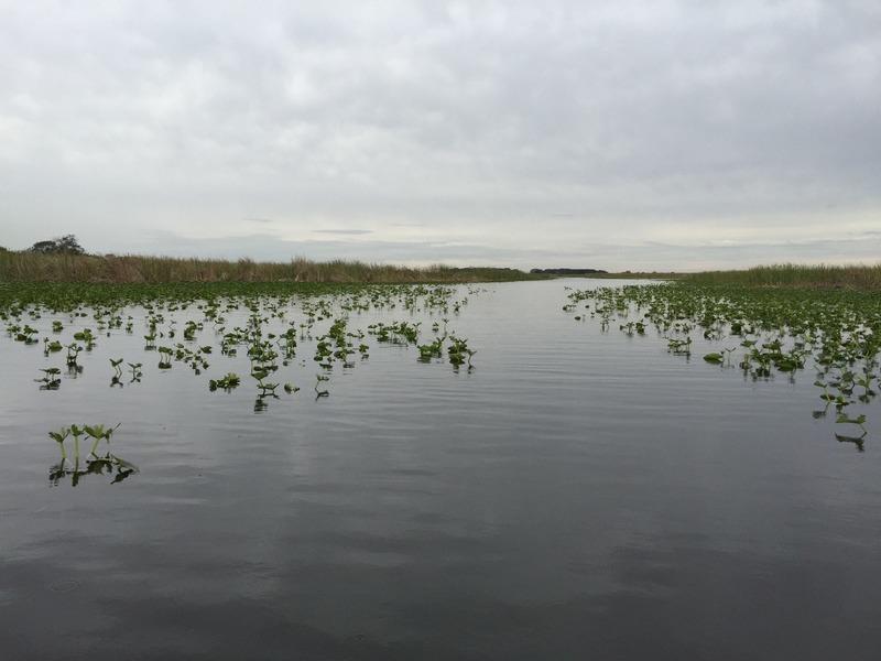 Lillypad filled waterways