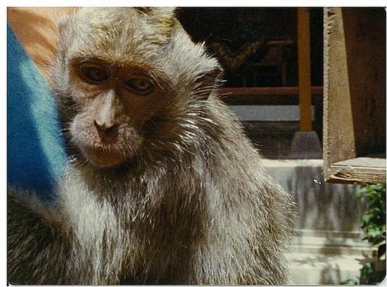 Magic the cute monkey