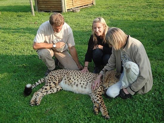Patting te cheetah