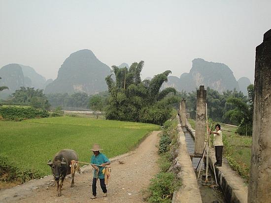 Lady by irrigation canal & buffalo man