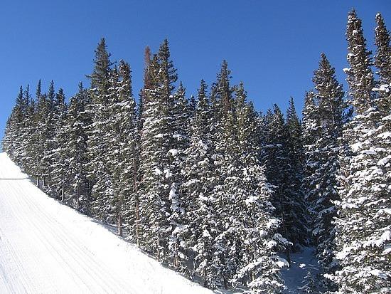 Blue sky & snow on the trees