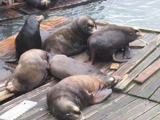 Seals in Newport