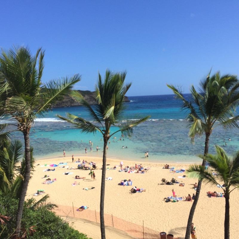 Palm Tree beach beauty