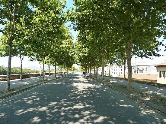 Shady chestnut trees