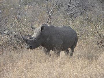 Rhino up close & personal