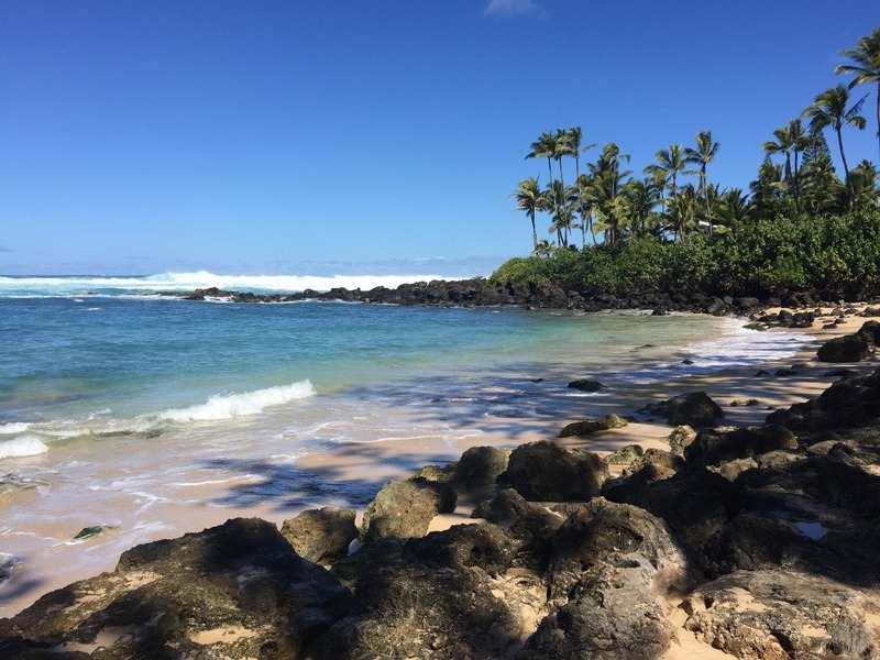 Turtle Basking beach