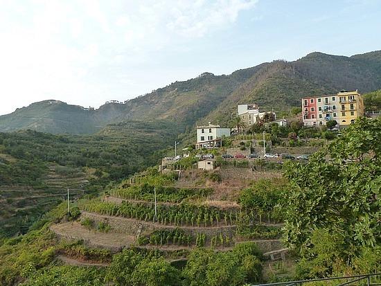 Vineyard terraces