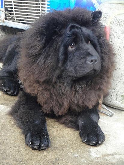 A Lion-Dog we saw!!!