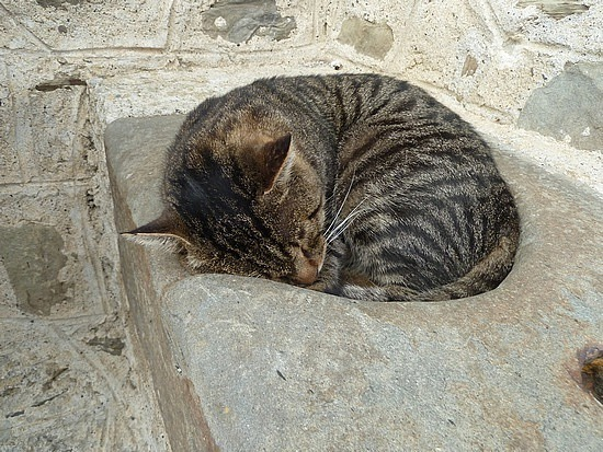 Found comfy place in a hole in the stone