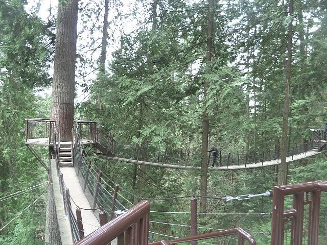 Treetops walk