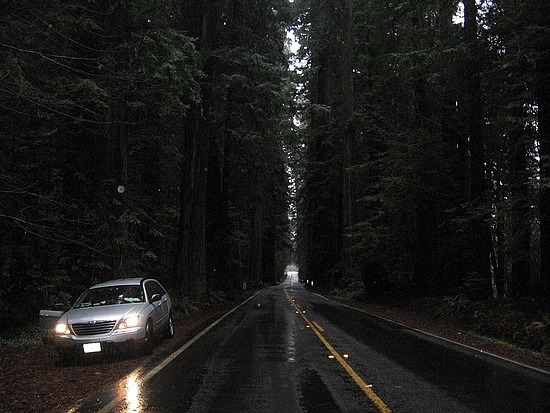 Darkness in a towering redwood forest
