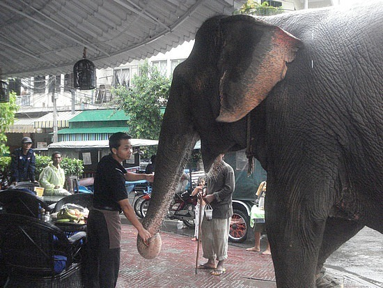 The local elephant that walks up Sisowath Qua