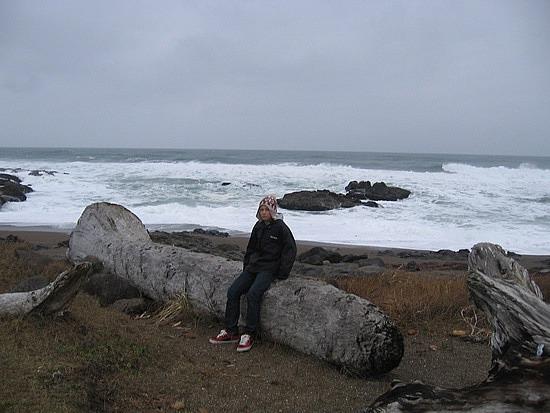 Massive log on a beach