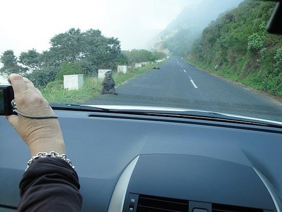 Baboon on road