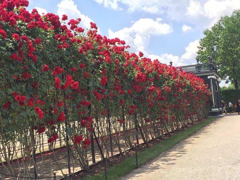 Stunning Rose trellis