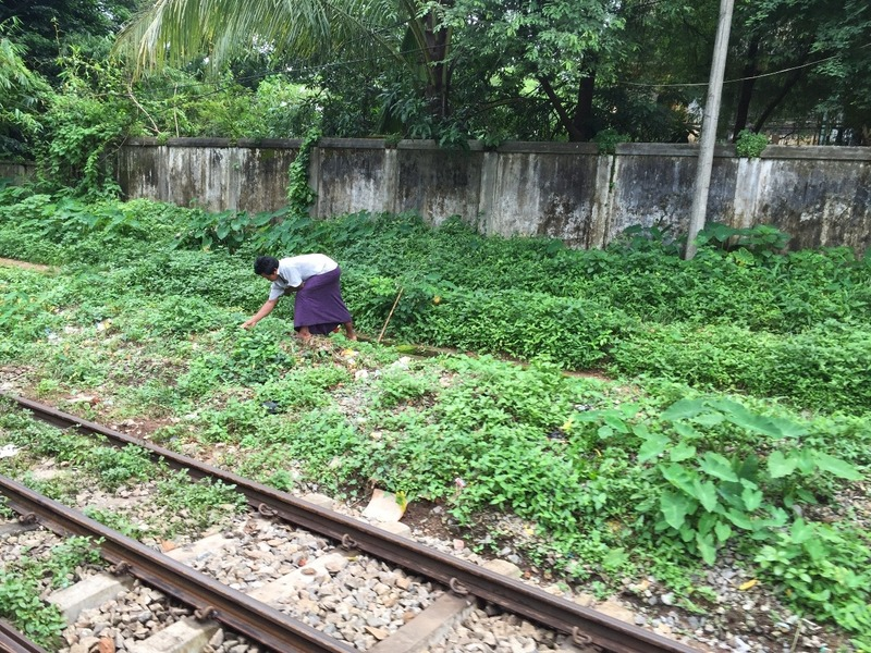 Life by the railway line
