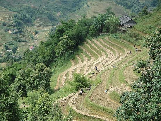 More terraces