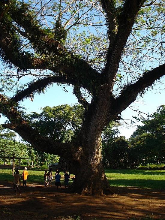 Loved this huge tree