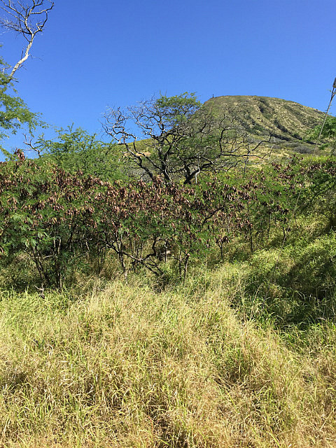 Looking to the top of Koko Crater