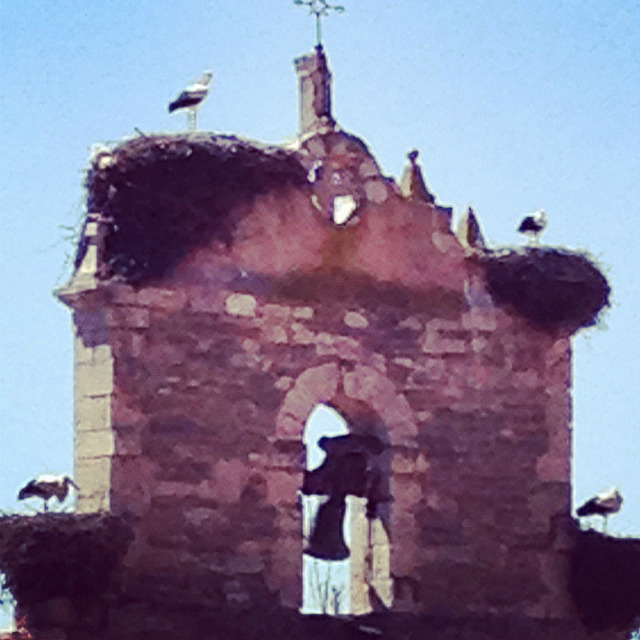 Stork nests