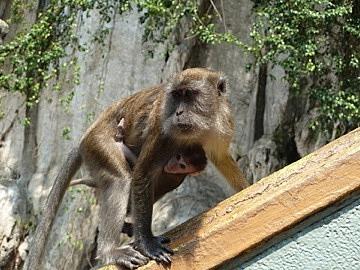 The mother monkey & baby I stalked