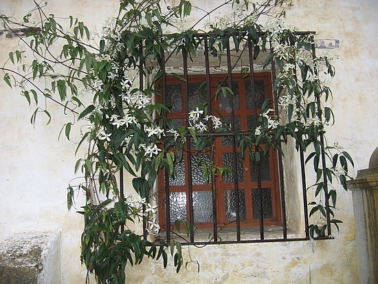 Vined window of  mission