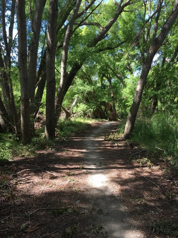 Pretty shaded trail