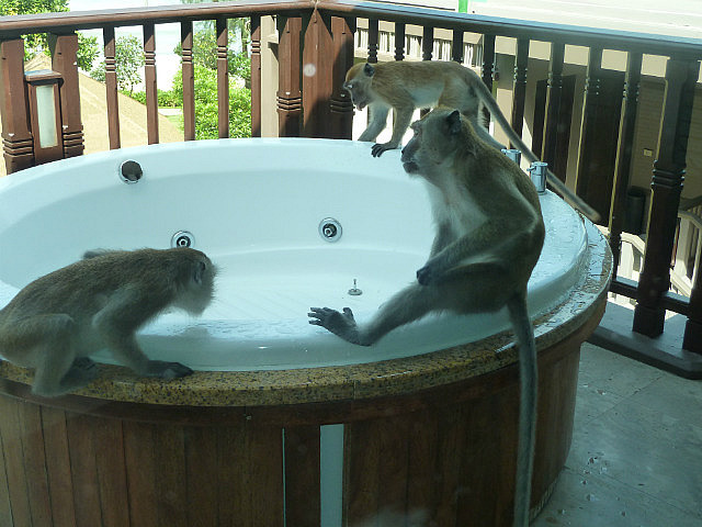 On the spa