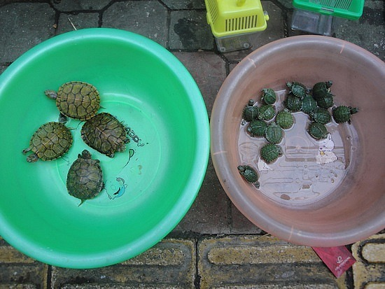 Small & smaller turtles
