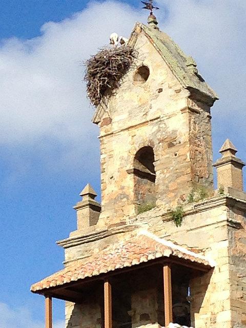 Last stork nest I saw