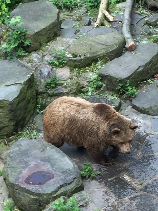 Bear in the moat