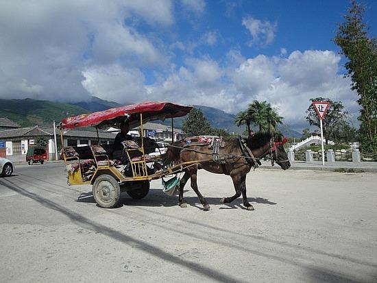 Horse& cart