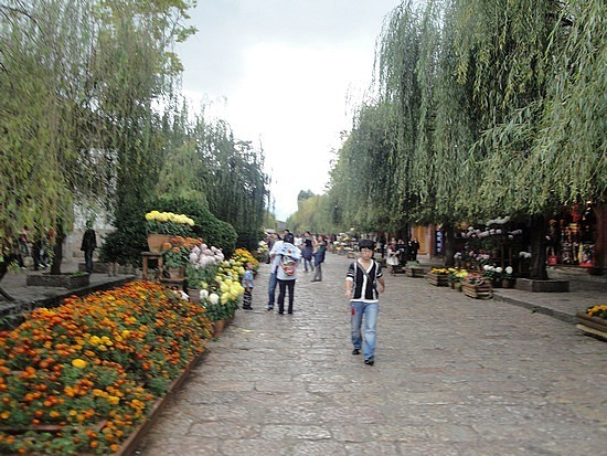 Willows & flowers at Town Square