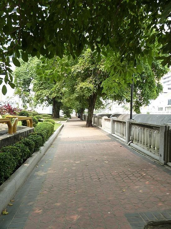 Banyan Trees by River walk