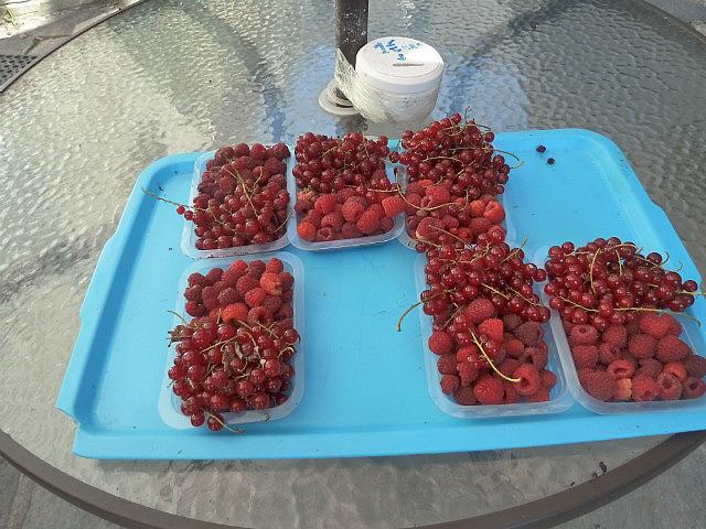 Fresh rasberries