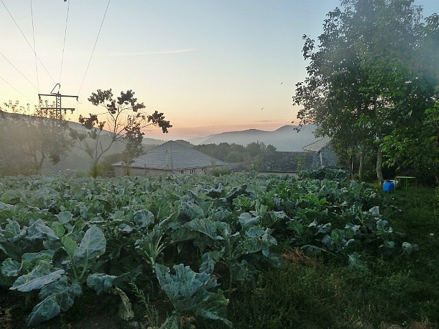 Crops and early morning