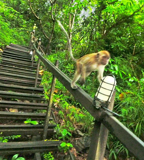 Here come the monkeys!