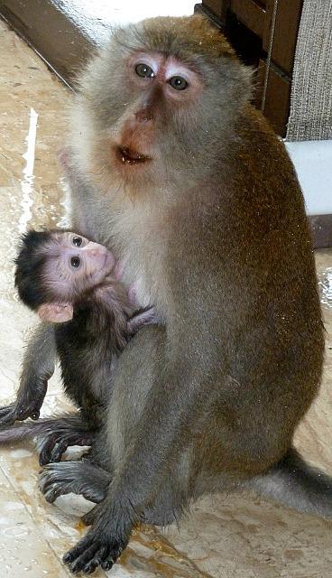 Mamma and bubba visitors
