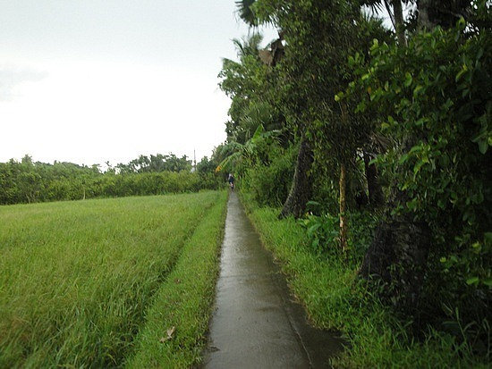 Paddy fields to our left