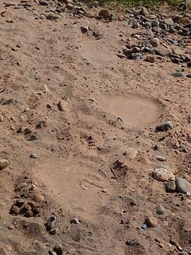 MOre Elephant footprints