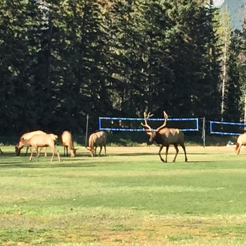 Big antlers