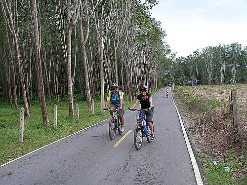 Cycling past rubber plantations
